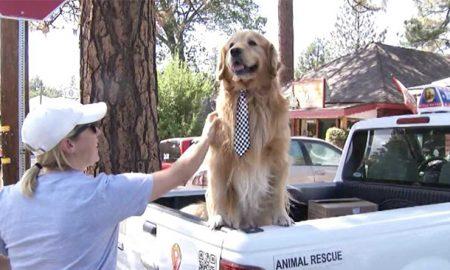 Thú vị thị trấn Mỹ chọn chú chó tên Max làm thị trưởng