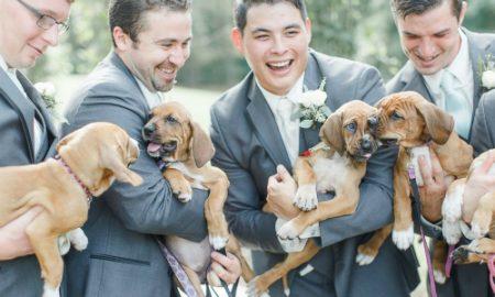 Tùng Lộc Pet – Cặp uyên ương tổ chức hôn lễ cùng cả bầy chó con