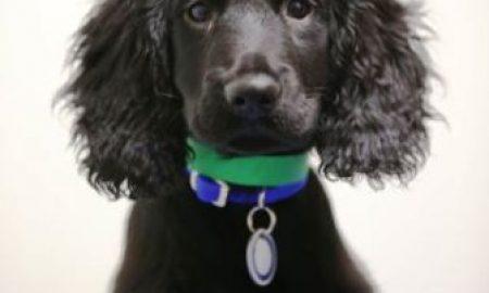Tùng Lộc Pet – Chú chó cứu chủ khỏi biển lửa