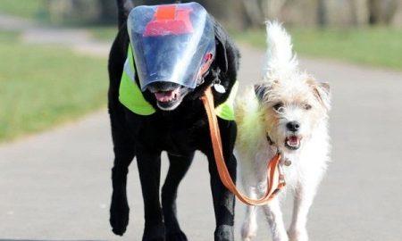 Tùng Lộc Pet – Tình bạn cảm động đáng quý của chú chó mù