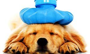 Tùng Lộc Pet – Tìm hiểu nguyên nhân cún bị ho