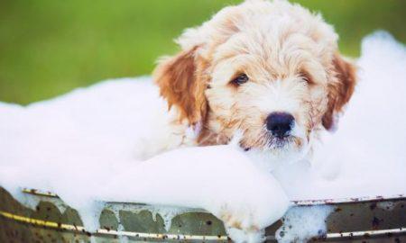 Tùng Lộc Pet – 7 sai lầm khi tắm cho thú cưng