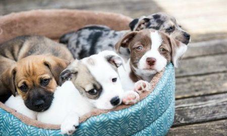 Tùng Lộc Pet – Những thứ đáng sợ tồn tại trên giường chú cún của bạn
