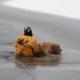 Tùng  Lộc Pet – Giải cứu chú chó bị rơi xuống dòng sông băng