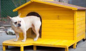 Tùng Lộc Pet – Chia sẻ kinh nghiệm dạy chó nghe lời