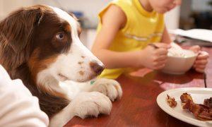 Tùng Lộc Pet – Những thực phẩm không bao giờ được cho cún ăn (Phần 1)