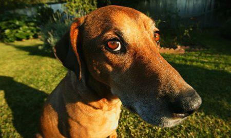 Tùng Lộc Pet – Những thói quen xấu của chó (Phần 2)