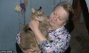 Tùng Lộc Pet –  Mèo anh hùng cứu em bé bị bỏ rơi khỏi chết cóng