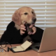 Tùng Lộc Pet – Chết cười với clip Một ngày của chú chó Golden tại Nhật