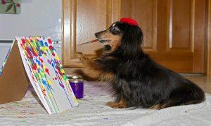 Tùng Lộc Pet – 9 điều khiến chú chó như 1 BFF của bạn