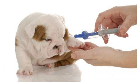 Tùng Lộc Pet – Tại sao chó đã tiêm Vaccine mà vẫn chết?