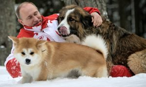 Tùng Lộc Pet – Nhật Bản tính tặng chó cho Tổng thống Putin, Nga từ chối