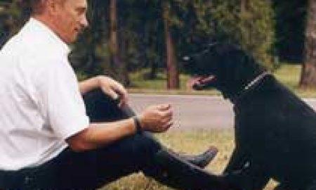 Chó cưng của Putin được gắn thiết bị theo dõi