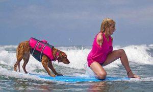 Tùng Lộc Pet – Cảm phục chú chó giúp người khuyết tật