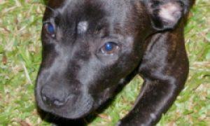 Tùng Lộc Pet – Tìm hiểu về bệnh nấm đồng xu trên chó