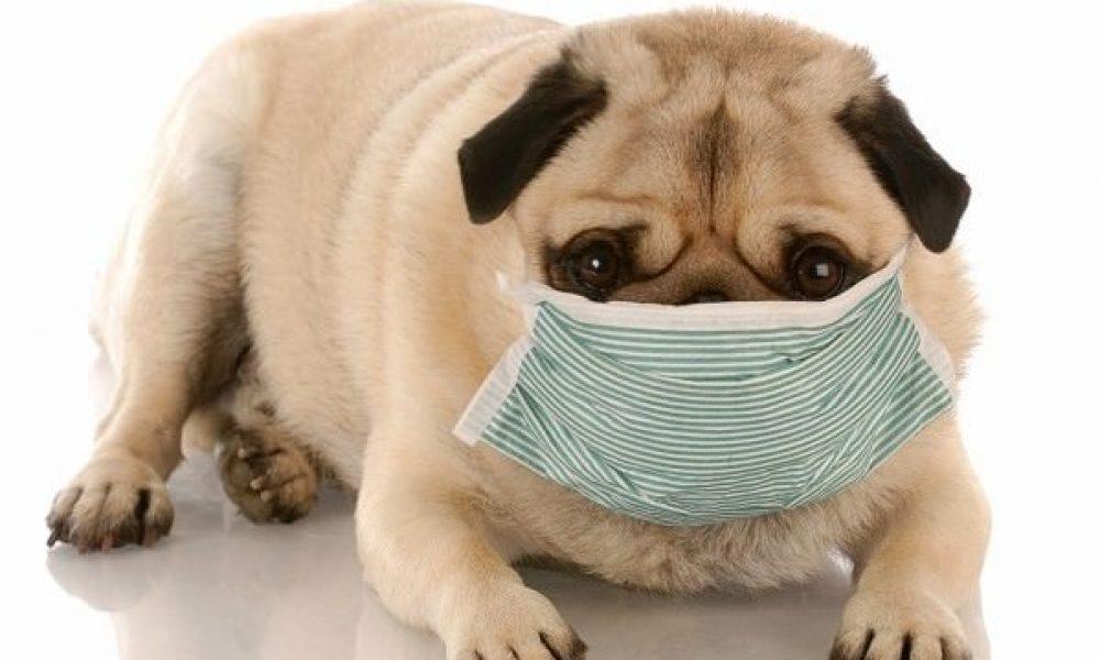 Tùng Lộc Pet – Hiểu biết về bệnh Parvovirus trên chó.