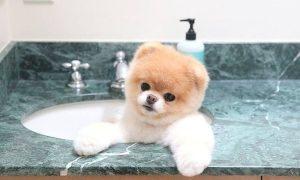 Tùng Lộc Pet – Bật cười cùng tiểu đội 13 chú cún thích vầy nước