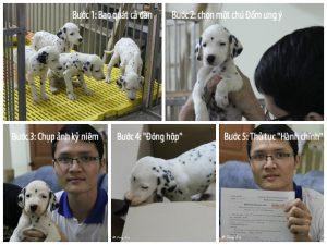 Lựa chọn một chú chó Đốm ưng ý