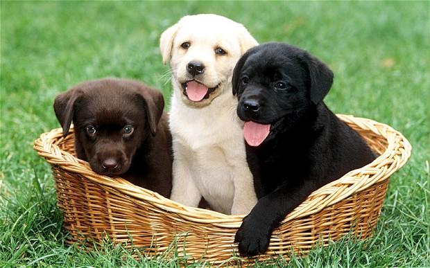 puppies_2769434b