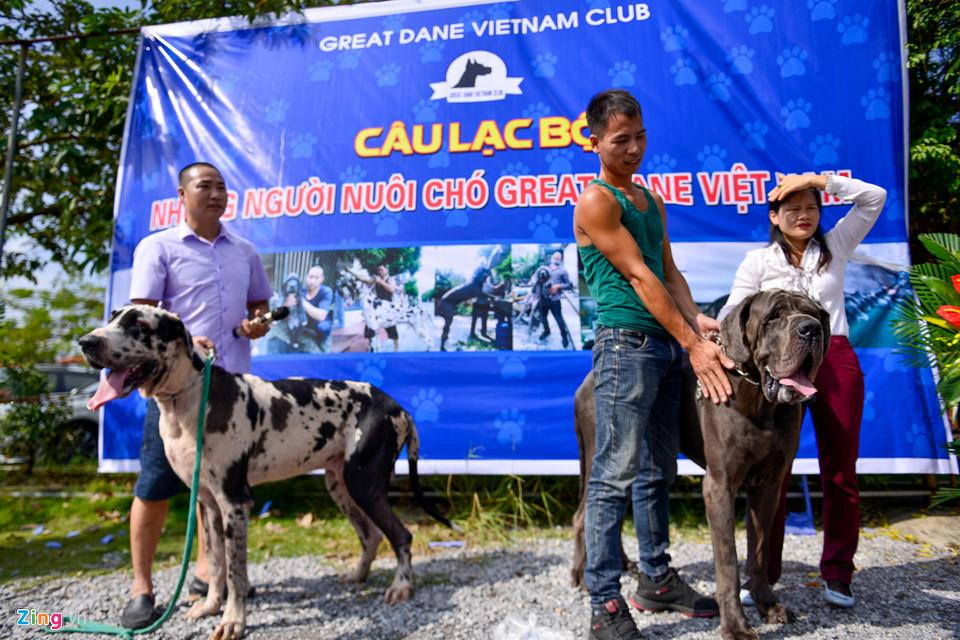 Chó hơn 100 kg xuất hiện ở Hà Nội