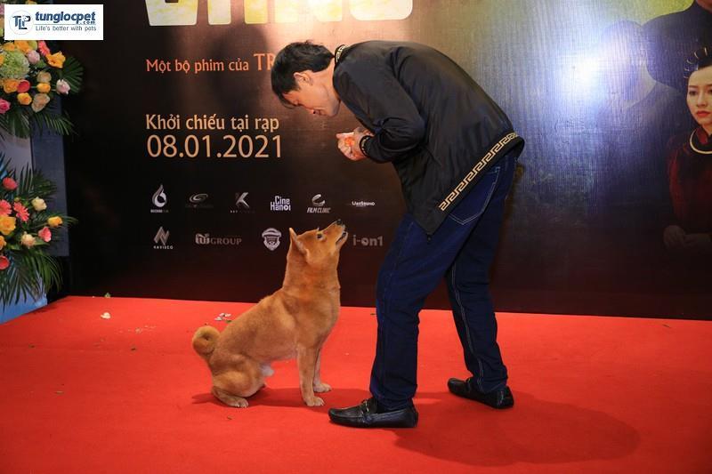 chú chó Shiba Inu đóng vai cậu vàng