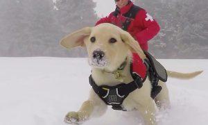 Tùng Lộc Pet – 15 khoảnh khắc khi cún cưng bỗng trở thành quái vật khổng lồ