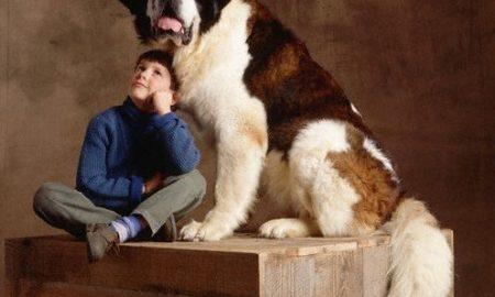 Tùng Lộc Pet – 10 loại chó to nhất Thế Giới (Phần 2)