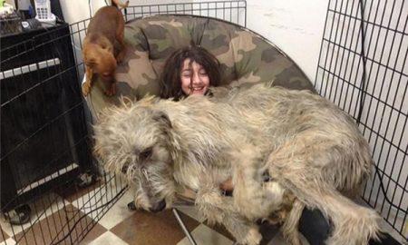 Tùng Lộc Pet – Cô chủ xinh xắn với chú cún khổng lồ