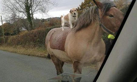 Tùng Lộc Pet – Sửng sốt với cảnh chó cưỡi ngựa