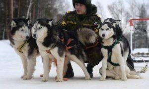 Tùng Lộc Pet – Khám phá trại huấn luyện chó nghiệp vụ của Nga