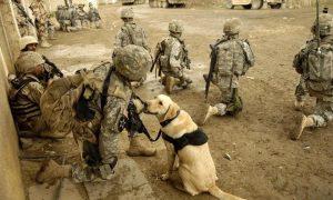 Tùng Lộc Pet – Cận cảnh Chó nghiệp vụ mỹ tác chiến