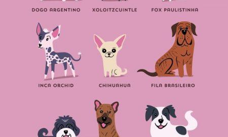 Tùng Lộc Pet – Poster về 192 giống chó khác nhau trên thế giới