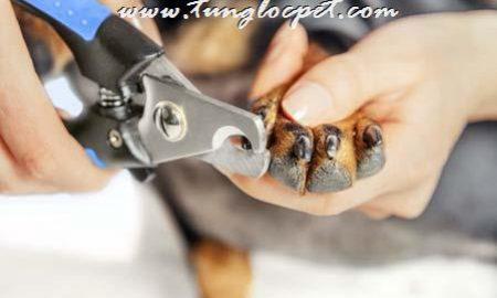 Tùng Lộc Pet – Cắt móng chân cho chó thế nào đúng cách