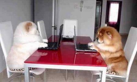 Tùng Lộc Pet – Tuyển dụng cộng tác viên Marketing Online