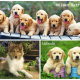 Ít thời gian & có trẻ nhỏ thì nên nuôi chó gì?