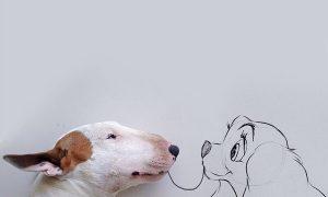 Tùng Lộc Pet –  Những bức hình bày trò siêu đáng yêu của chú chó bull terrier cùng cậu chủ