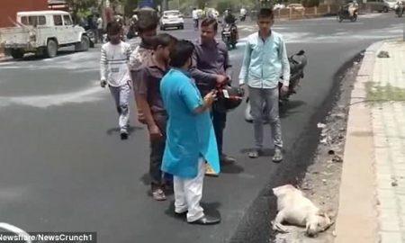 Chú chó mải ngủ chết thảm vì kẹt trong nhựa đường nóng ở Ấn Độ