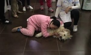 Đau đớn khóc thảm thiết vì chó đem từ Mỹ về bị hàng xóm đầu độc