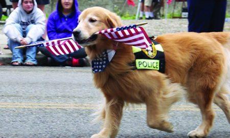 Tùng Lộc Pet – Những chú chó nghiệp vụ trung thành nhất trên thế giới