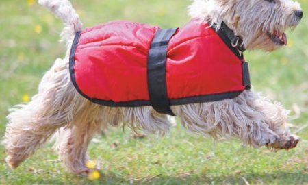 Tùng Lộc Pet – Bảo vệ an toàn cho những chú cún của bạn vào mùa đông