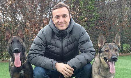 Tùng Lộc Pet – Sao Ngoại hạng Anh đua nhau nuôi chó nghiệp vụ