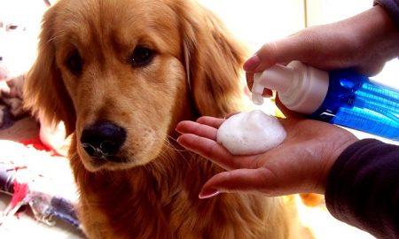 Tùng Lộc Pet – Tại sao chó bị hôi và cách xử lý.