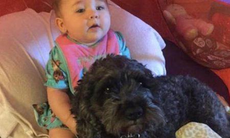Tùng Lộc Pet – Chó thiệt mạng vì che chắn cho cô chủ nhỏ trong hỏa hoạn